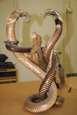 käärmeet