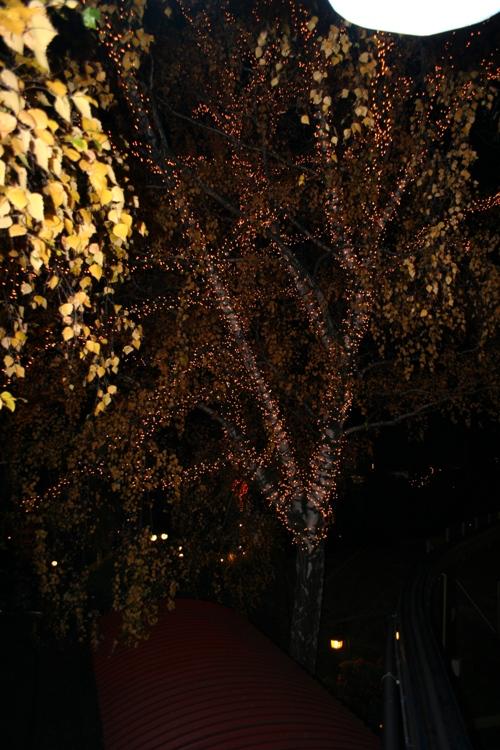 Valaistu puu