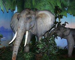 big_safari4.jpg 79k