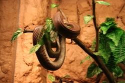 Käärme