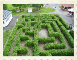 HEDGE MAZE - Height restriction: no restrictions